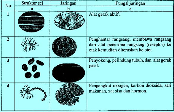 Sel dan jaringan serta fungsinya