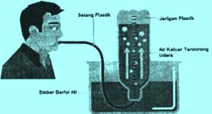 Ízületi paraziták kezelése - Paraziták ízületi fájdalmak esetén